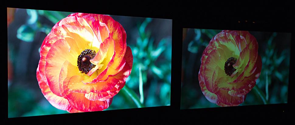 B_0514_Dolby_Vision_Flower