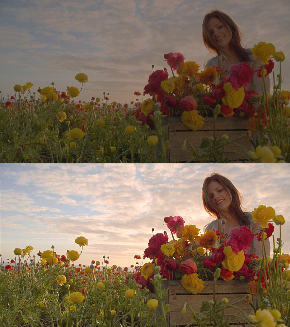 B_0514_Dolby_Vision_Flowerfield