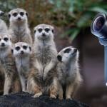 Camera Corps Meercat: HD-Broadcast-Kamera im Miniaturformat