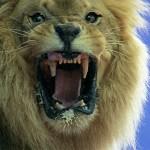 Framepool: Tieraufnahmen vor Green- und Bluescreen verfügbar