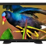 Neuer 18,5-Zoll Monitor für 3G/HD-SDI-Signale von Marshall