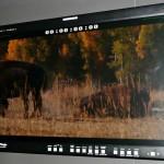 NAB2009: TV Logic-Monitor für Klasse-1-Einsätze