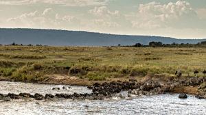 Safari Live, Mara-Überquerung