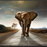 IBC2018: So richtig scharf – Sharp 8K-Monitor bei G&D