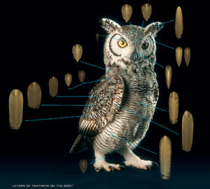 Subarctic Great Horned Owl, © Yuriy Dulich
