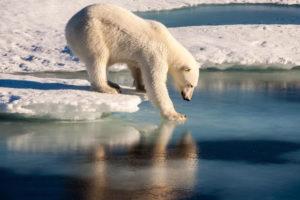 © UFA/Mario Hoppmann, Arctic Drift